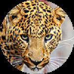 """Картины на холсте по теме """"Пантеры, леопарды"""""""