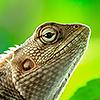Земноводные и рептилии