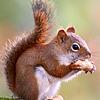 Грызуны (белки, кроли и т.д.)