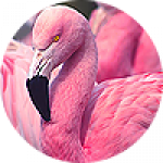 """Картины на холсте по теме """"Фламинго"""""""