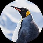 "Картины на холсте по теме ""Пингвины"""