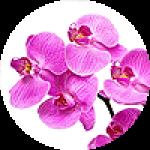 """Картины на холсте по теме """"Орхидеи"""""""