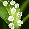 Первоцветы (ландыши, подснежники и т.д.)