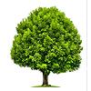 Цветущие деревья, кустарники