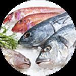 """Картины на холсте по теме """"Рыба и морепродукты"""""""