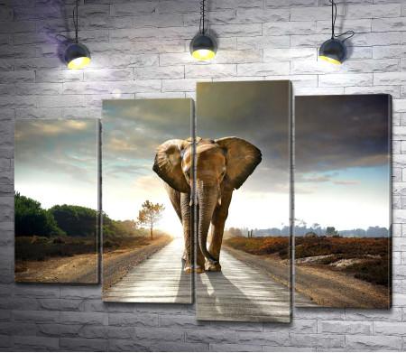 Одинокий слон на дороге