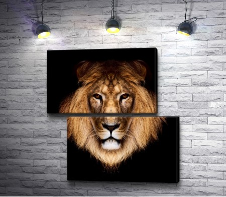 Голова льва на черном фоне