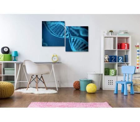 Макромолекула ДНК