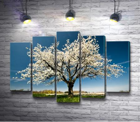 Цветущее дерево весной