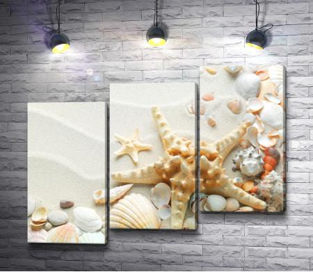 Морские ракушки на белом песке