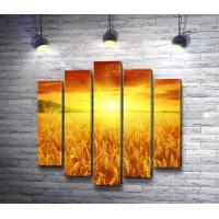 Рассвет над пшеничным полем
