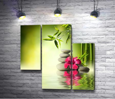 Орхидея и бамбук над гладью воды
