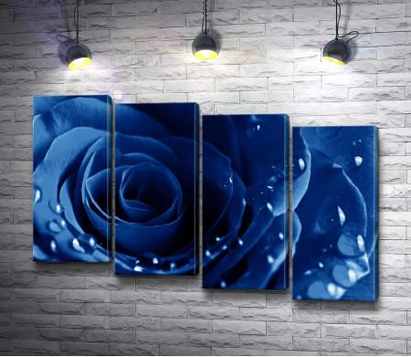 Синяя роза. Макросъемка
