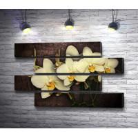 Белоснежные орхидеи