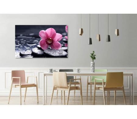 Розовая орхидея на камнях