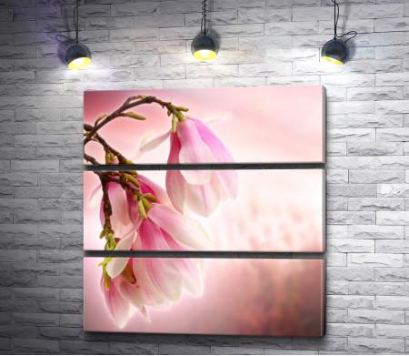 Легкие светло-розовые цветы