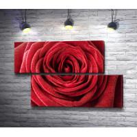 Роскошный бутон красной розы