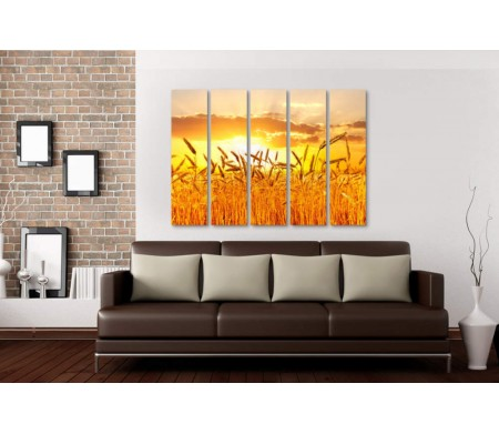 Колосья пшеницы на фоне заката