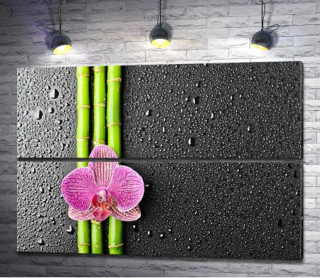 Орхидея на ветках бамбука