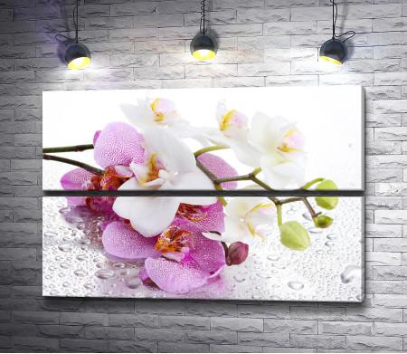 Лепестки орхидеи в капельках росы