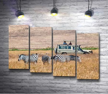 Зебры в Сафари