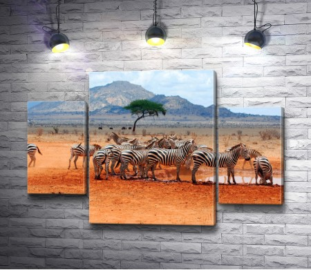 Зебры у водопоя на фоне горы