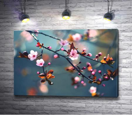 Веточка цветущей сакуры