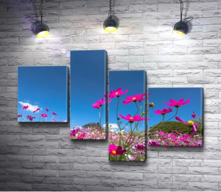 Дикие цветы на фоне безоблачного неба