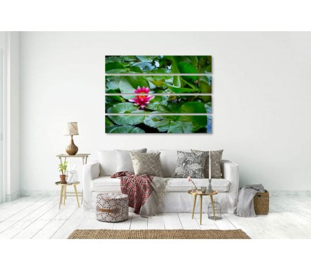 Малиновый цветок лотоса в пруде