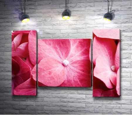 Романтические цветы