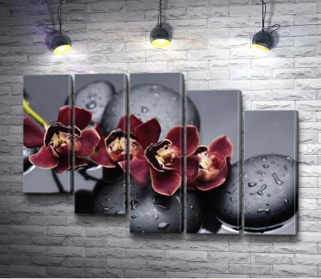 Красная орхидея с дзен-камнями на мокром черном фоне