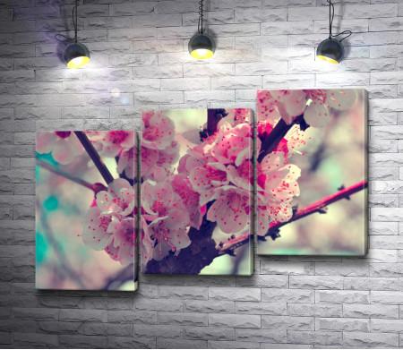 Цветущая сакура