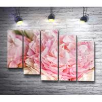 Нежно-розовые пионы