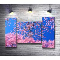 Завораживающее цветение сакуры