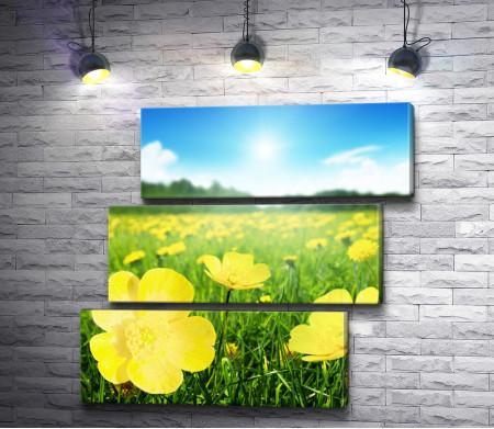 Зеленое поле в желтых цветах
