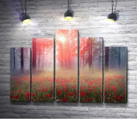 Поляна цветущих маков ранним утром в лесу
