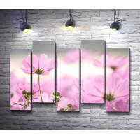 Весенние цветы розового цвета