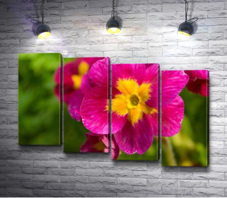 Малиновый цветок с желтой сердцевиной