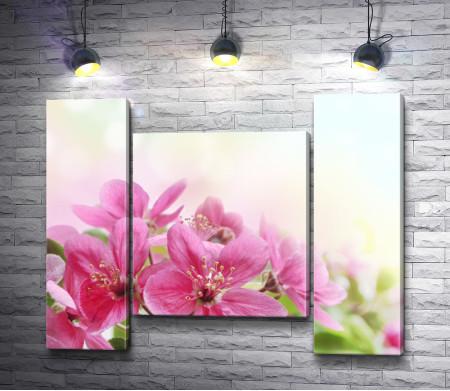 Веточка розовых цветов