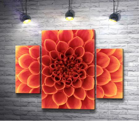 Оранжевая хризантема. Макросъемка
