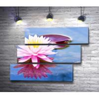 Нежный цветок лотоса на водной глади
