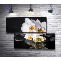 Белая орхидея и камни спа на черном фоне