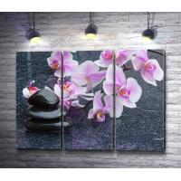 Сиреневые орхидеи и камни спа