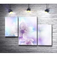 Нежные цветы сакуры в дымке
