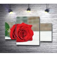 Красная роза на подоконнике
