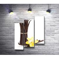 Стручки ванили и желтая орхидея на белом фоне
