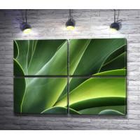 Зеленые листья. Макросъемка