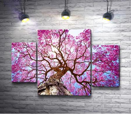 Крона цветущей сакуры
