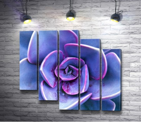 Пурпурный каменный цветок - суккулент