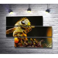 Огромная пчела. Макро